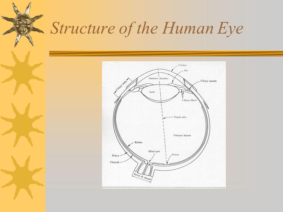 Structure of the Human Eye (cont.)  3 Membran yang membungkus mata –Cornea dan Sclera –Choroid –Retina  Fovea adalah bagian dari retina yang mempunyai bagian penerima  Blind Spot : adalah bagian retina yang tidak mengandung receptor sehingga tidak dapat menerima dan menginterpretasi informasi