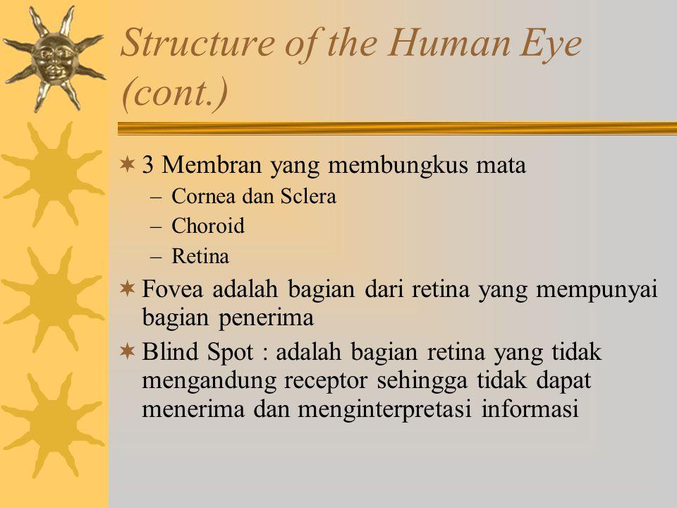 Structure of the Human Eye (cont.)  3 Membran yang membungkus mata –Cornea dan Sclera –Choroid –Retina  Fovea adalah bagian dari retina yang mempuny