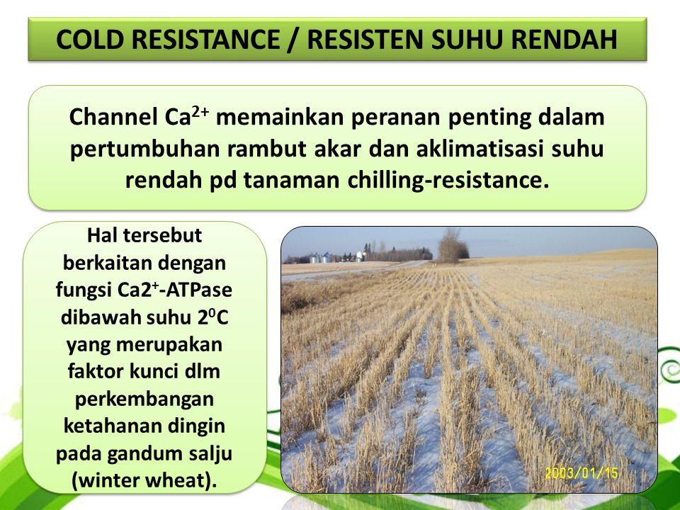 Channel Ca 2+ memainkan peranan penting dalam pertumbuhan rambut akar dan aklimatisasi suhu rendah pd tanaman chilling-resistance.
