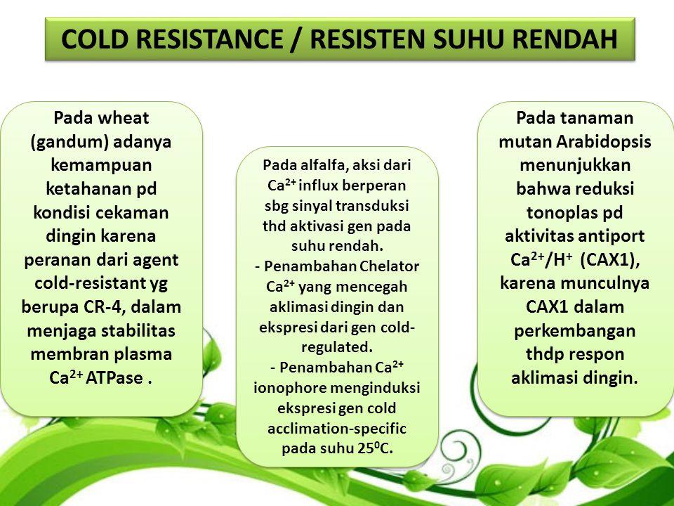 Pada wheat (gandum) adanya kemampuan ketahanan pd kondisi cekaman dingin karena peranan dari agent cold-resistant yg berupa CR-4, dalam menjaga stabilitas membran plasma Ca 2+ ATPase.