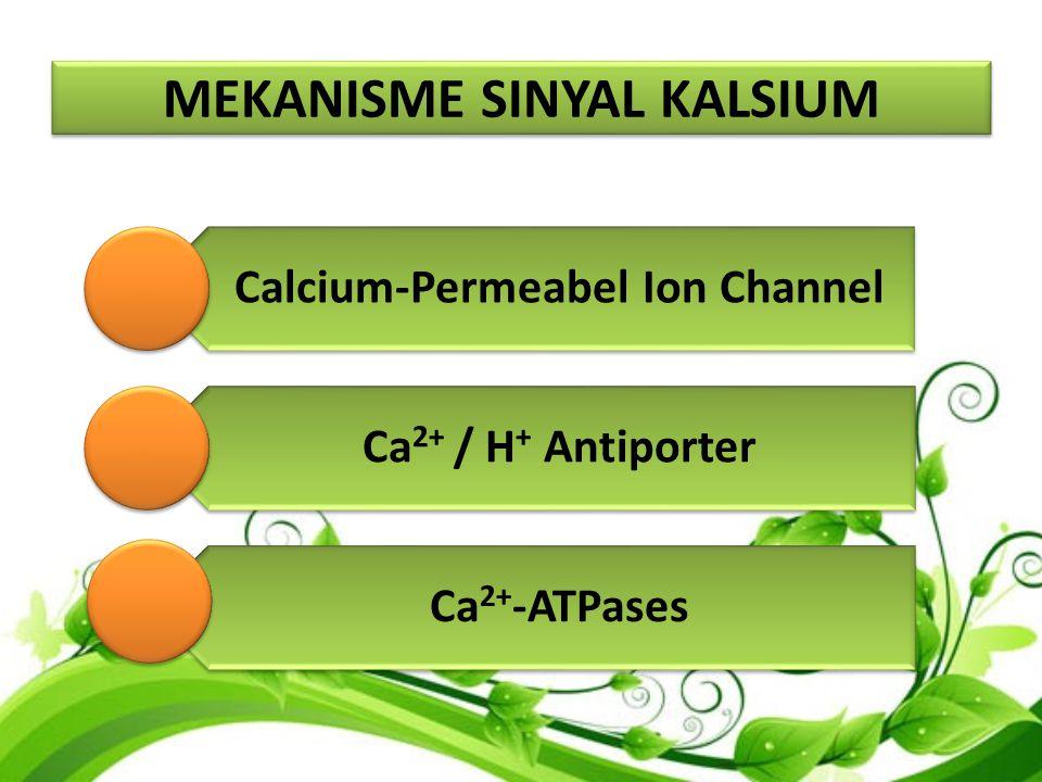 MEKANISME SINYAL KALSIUM 1.Calcium-Permeabel Ion Channel Kanal ion merupakan protein membran yang terdapat pada lapisan lipid membran sel, tersusun dari beberapa sub-unit protein membentuk suatu pori-pori Fungsinya: Transport ion, Pengaturan potensial listrik melintasi membran sel, Signaling sel (Kanal Ca++)