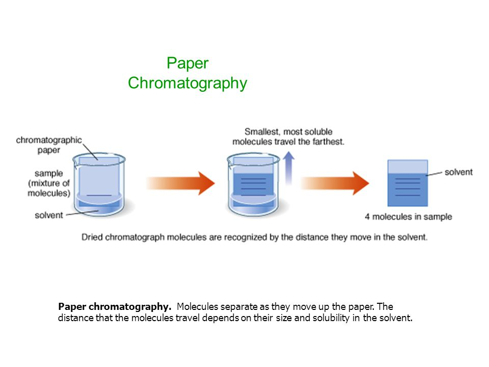 Paper Chromatography Paper chromatography. Molecules separate as they move up the paper. The distance that the molecules travel depends on their size