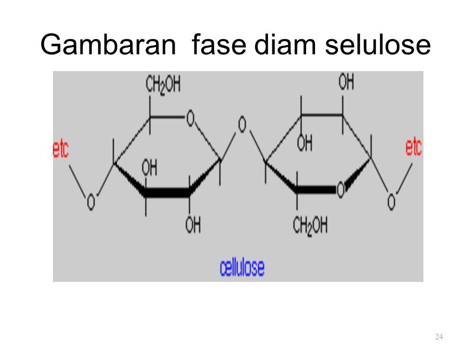 Gambaran fase diam selulose 24
