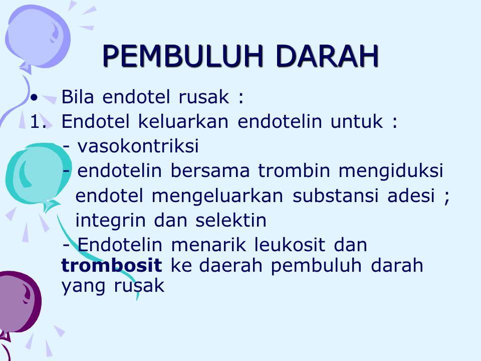 PEMBULUH DARAH Bila endotel rusak : 1.Endotel keluarkan endotelin untuk : - vasokontriksi - endotelin bersama trombin mengiduksi endotel mengeluarkan