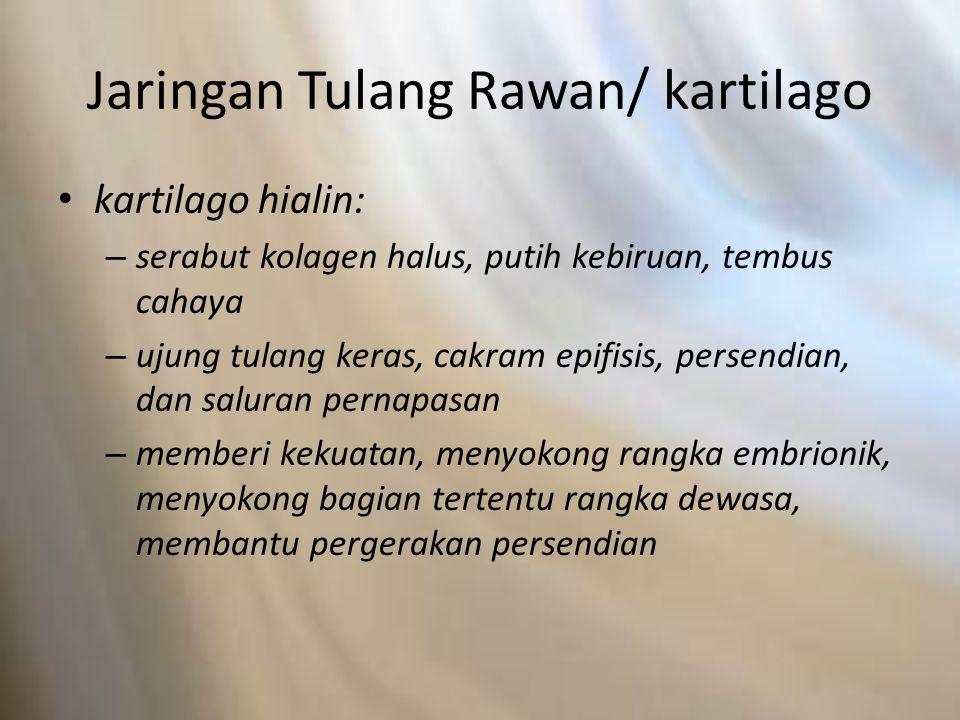 Jaringan Tulang Rawan/ kartilago kartilago hialin: – serabut kolagen halus, putih kebiruan, tembus cahaya – ujung tulang keras, cakram epifisis, perse
