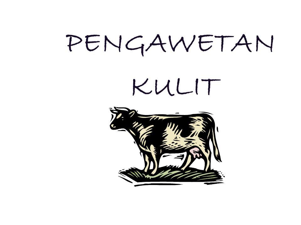 KULIT SEGAR (MENTAH) I.PenyamakanII.