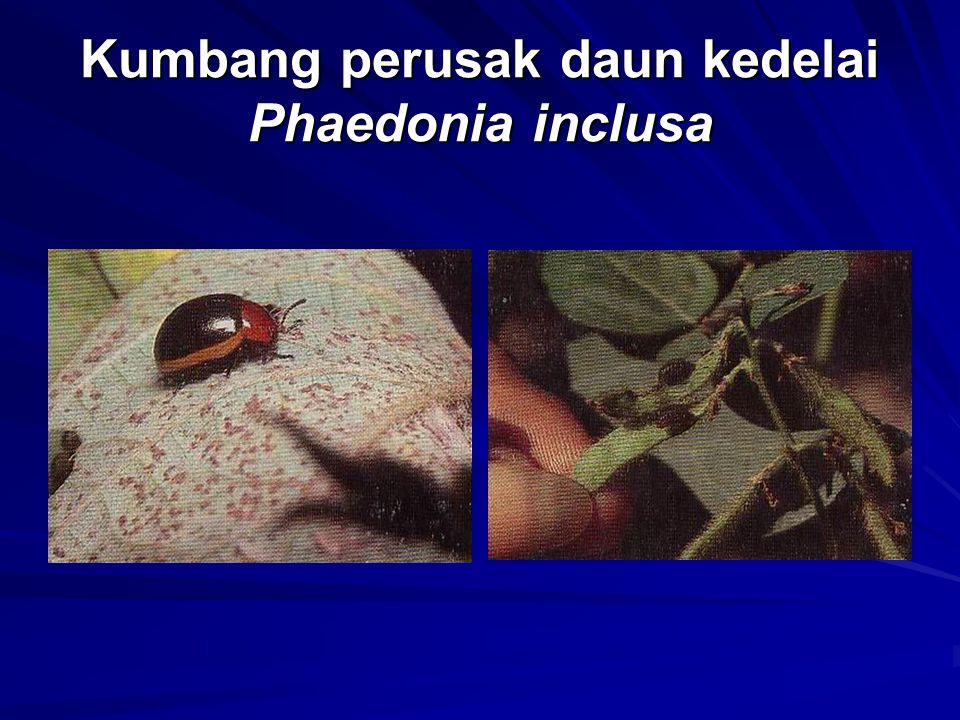 Kumbang perusak daun kedelai Phaedonia inclusa