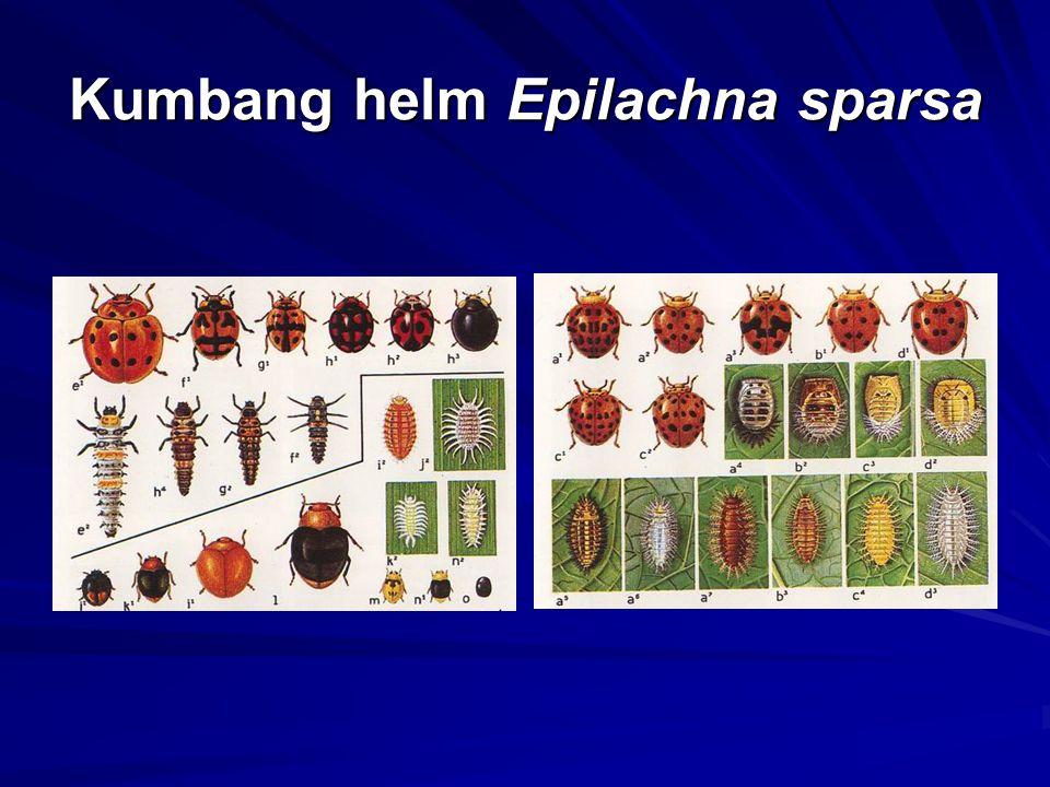 Kumbang helm Epilachna sparsa