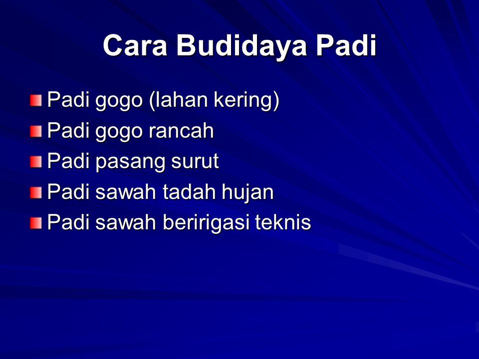 Cara Budidaya Padi Padi gogo (lahan kering) Padi gogo rancah Padi pasang surut Padi sawah tadah hujan Padi sawah beririgasi teknis