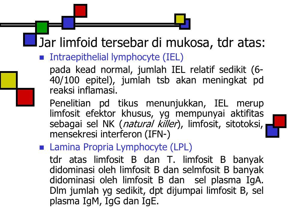 Jar limfoid tersebar di mukosa, tdr atas: Intraepithelial lymphocyte (IEL) pada kead normal, jumlah IEL relatif sedikit (6- 40/100 epitel), jumlah tsb