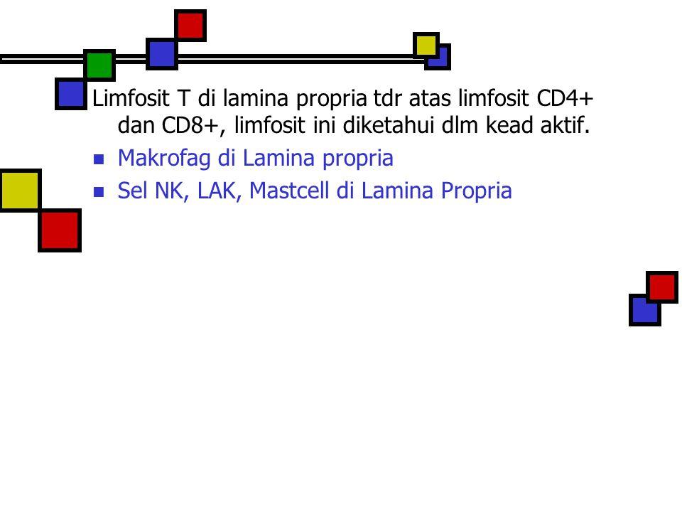 Limfosit T di lamina propria tdr atas limfosit CD4+ dan CD8+, limfosit ini diketahui dlm kead aktif. Makrofag di Lamina propria Sel NK, LAK, Mastcell