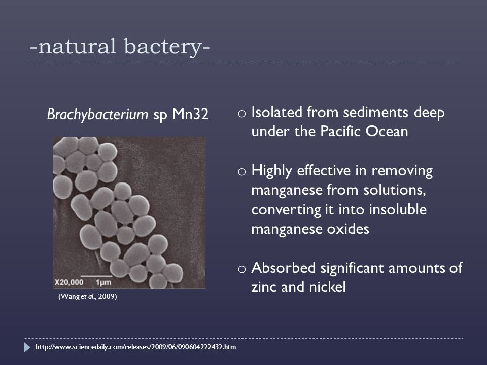 -natural bactery- Brachybacterium sp Mn32 (Wang et al., 2009) o Isolated from sediments deep under the Pacific Ocean o Highly effective in removing manganese from solutions, converting it into insoluble manganese oxides o Absorbed significant amounts of zinc and nickel http://www.sciencedaily.com/releases/2009/06/090604222432.htm