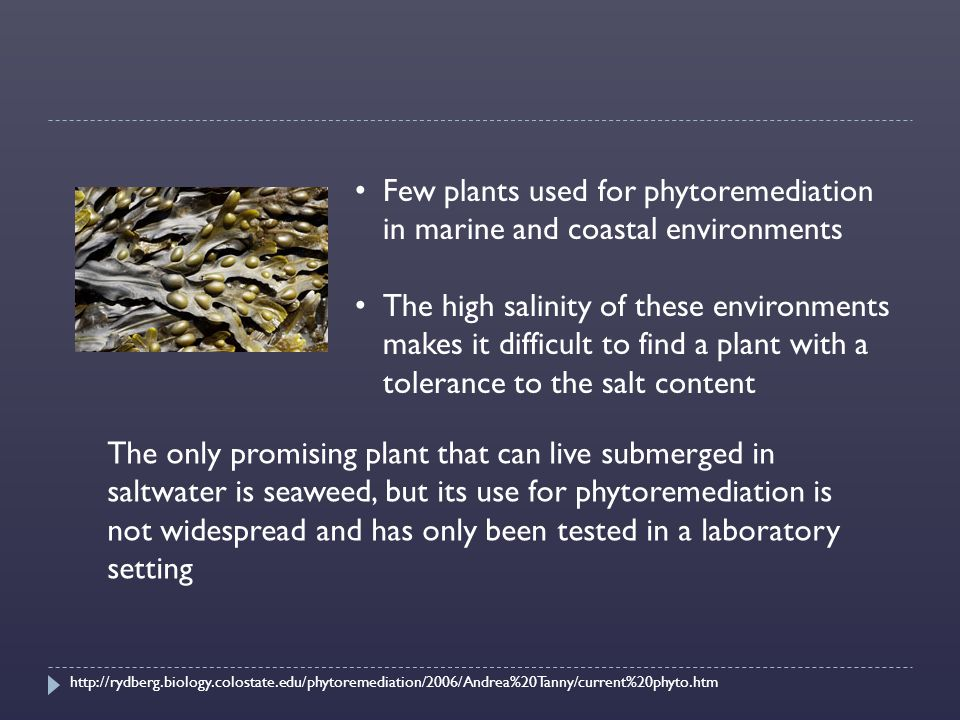 Few plants used for phytoremediation in marine and coastal environments The high salinity of these environments makes it difficult to find a plant with a tolerance to the salt content The only promising plant that can live submerged in saltwater is seaweed, but its use for phytoremediation is not widespread and has only been tested in a laboratory setting http://rydberg.biology.colostate.edu/phytoremediation/2006/Andrea%20Tanny/current%20phyto.htm