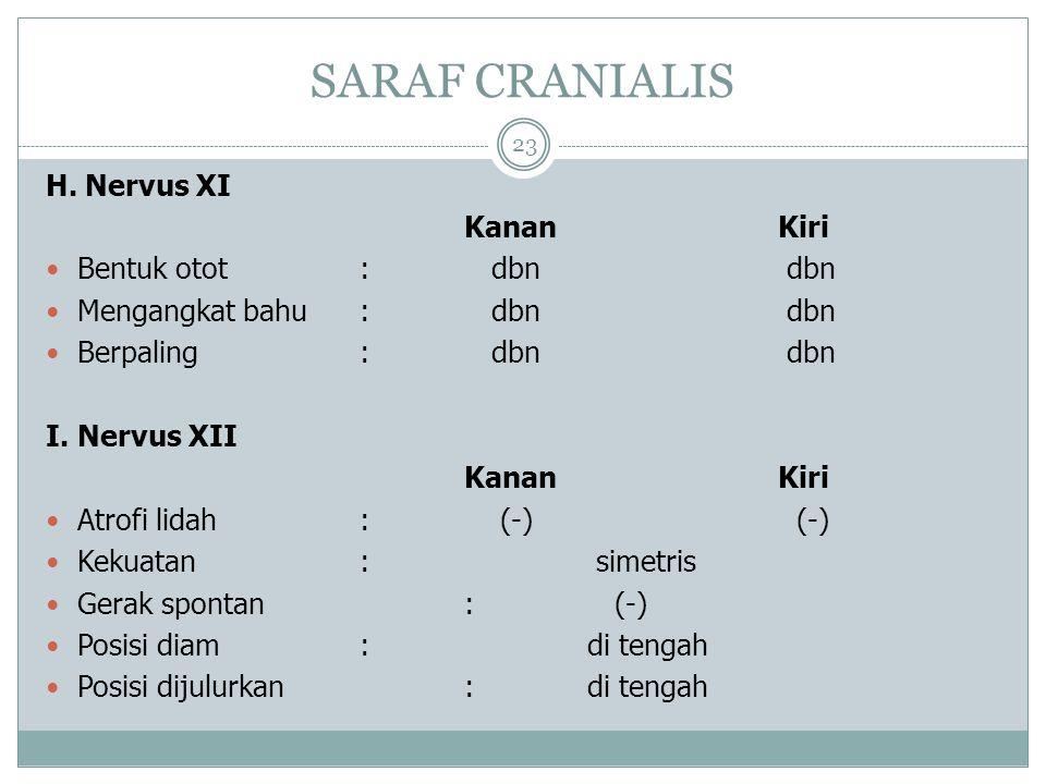 SARAF CRANIALIS 23 H.