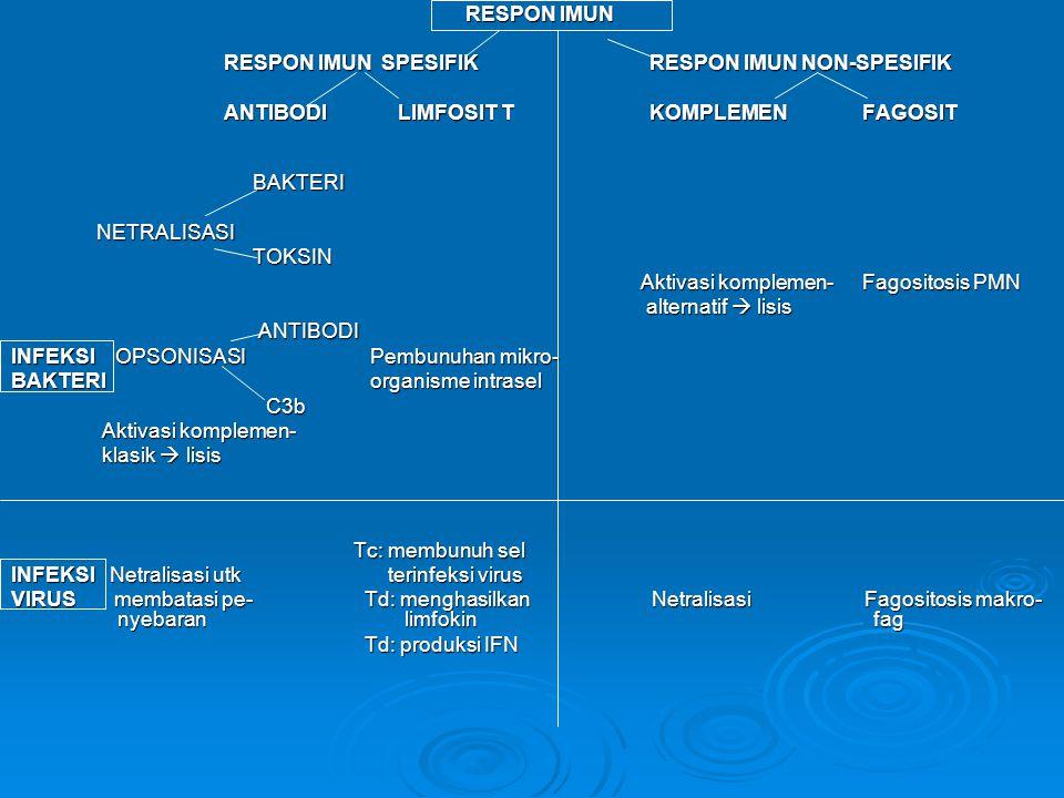 RESPON IMUN RESPON IMUN RESPON IMUN SPESIFIKRESPON IMUN NON-SPESIFIK ANTIBODI LIMFOSIT TKOMPLEMENFAGOSIT BAKTERI BAKTERI NETRALISASI NETRALISASI TOKSIN TOKSIN Aktivasi komplemen-Fagositosis PMN Aktivasi komplemen-Fagositosis PMN alternatif  lisis alternatif  lisis ANTIBODI ANTIBODI INFEKSI OPSONISASI Pembunuhan mikro- BAKTERI organisme intrasel C3b C3b Aktivasi komplemen- Aktivasi komplemen- klasik  lisis klasik  lisis Tc: membunuh sel Tc: membunuh sel INFEKSI Netralisasi utk terinfeksi virus VIRUS membatasi pe- Td: menghasilkan Netralisasi Fagositosis makro- nyebaran limfokin fag Td: produksi IFN Td: produksi IFN