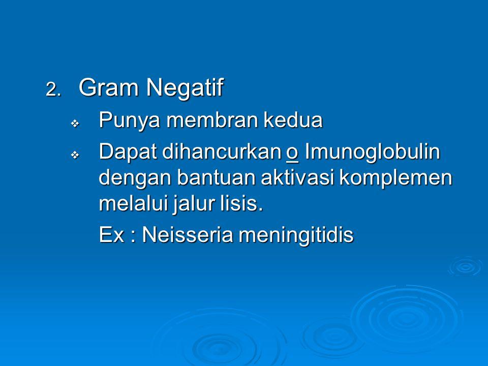 2. Gram Negatif  Punya membran kedua  Dapat dihancurkan o Imunoglobulin dengan bantuan aktivasi komplemen melalui jalur lisis. Ex : Neisseria mening