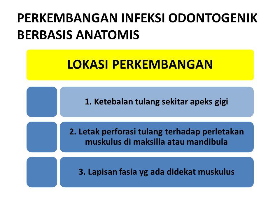 PERKEMBANGAN INFEKSI ODONTOGENIK BERBASIS ANATOMIS LOKASI PERKEMBANGAN 1. Ketebalan tulang sekitar apeks gigi 2. Letak perforasi tulang terhadap perle