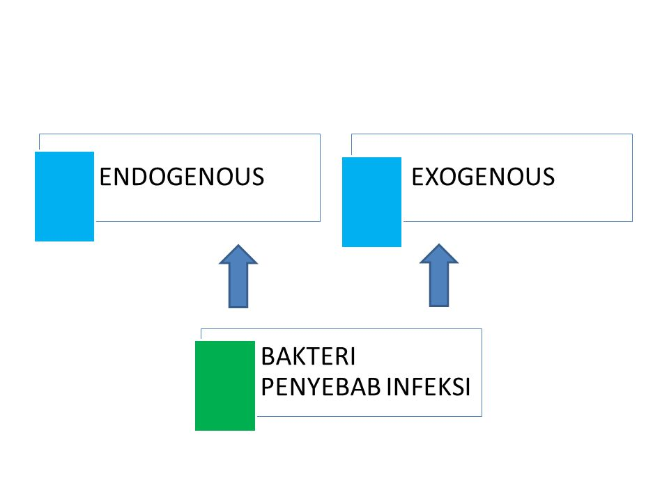 ENDOGENOUSEXOGENOUS BAKTERI PENYEBAB INFEKSI
