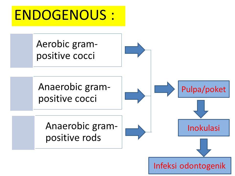 ENDOGENOUS : Anaerobic gram- positive cocci Aerobic gram- positive cocci Anaerobic gram- positive rods Pulpa/poket Inokulasi Infeksi odontogenik