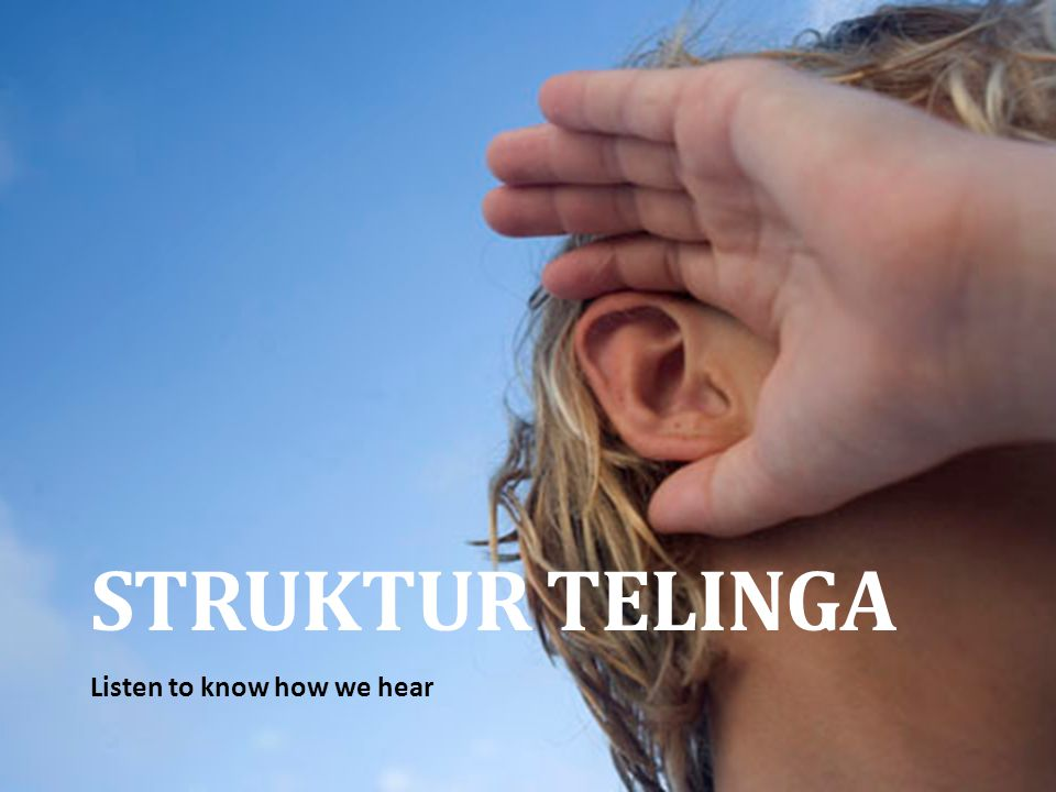 STRUKTUR TELINGA Listen to know how we hear
