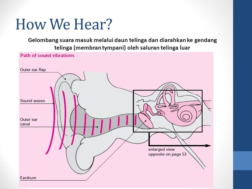 How We Hear? Gelombang suara masuk melalui daun telinga dan diarahkan ke gendang telinga (membran tympani) oleh saluran telinga luar