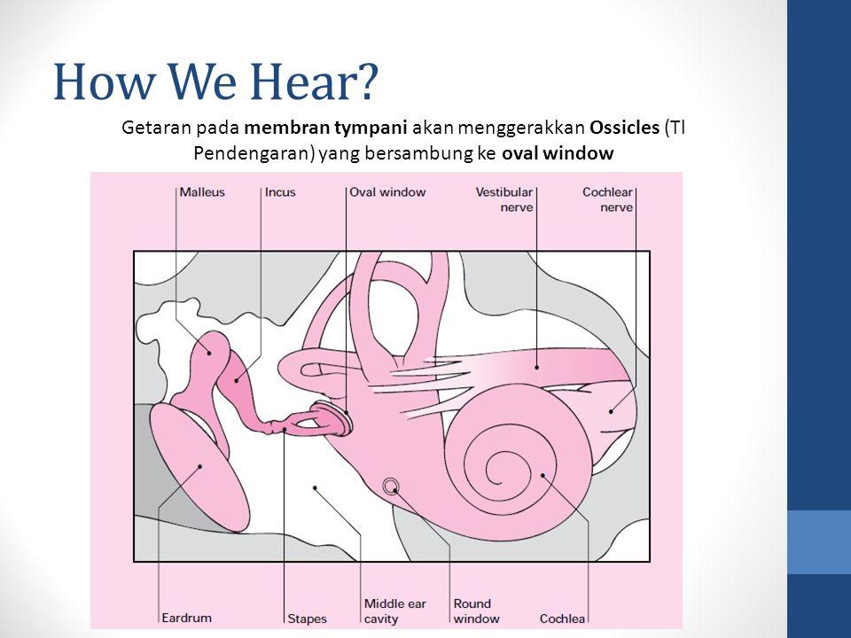 How We Hear? Getaran pada membran tympani akan menggerakkan Ossicles (Tl Pendengaran) yang bersambung ke oval window