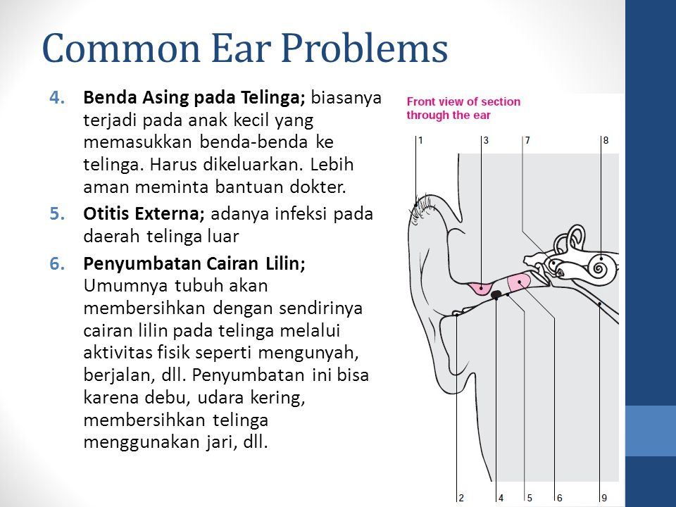 Common Ear Problems 4.Benda Asing pada Telinga; biasanya terjadi pada anak kecil yang memasukkan benda-benda ke telinga. Harus dikeluarkan. Lebih aman