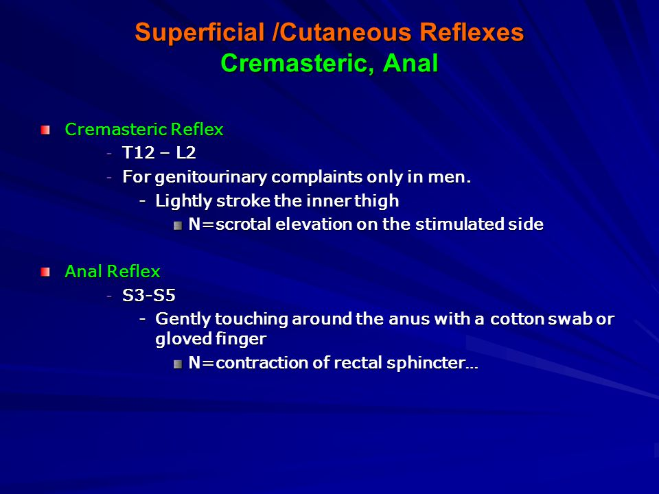 Superficial /Cutaneous Reflexes Abdominal, Plantar Abdominal Reflex –T8-T10 spinal nerves - controls upper abdominal muscles –T10-T12 – lower abdominals Dorsal Recumbent.