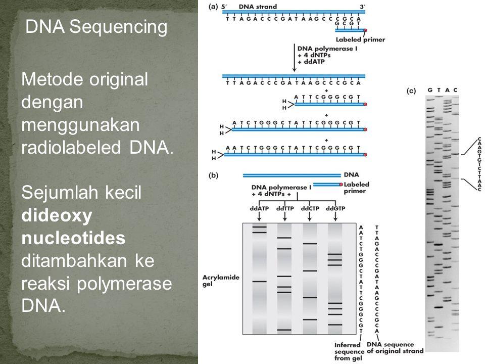 DNA Sequencing Metode original dengan menggunakan radiolabeled DNA. Sejumlah kecil dideoxy nucleotides ditambahkan ke reaksi polymerase DNA.