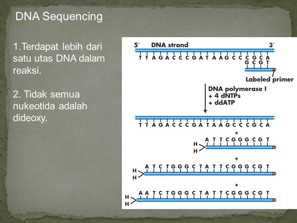 DNA Sequencing 1.Terdapat lebih dari satu utas DNA dalam reaksi. 2. Tidak semua nukeotida adalah dideoxy.