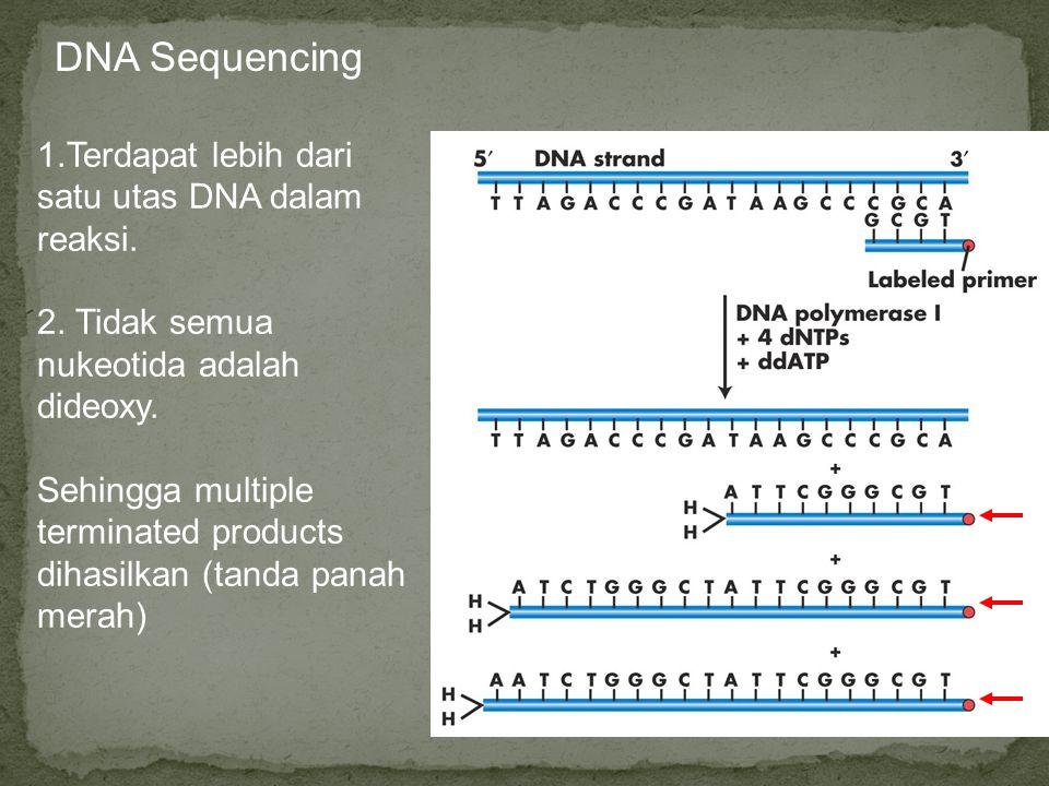 DNA Sequencing 1.Terdapat lebih dari satu utas DNA dalam reaksi. 2. Tidak semua nukeotida adalah dideoxy. Sehingga multiple terminated products dihasi
