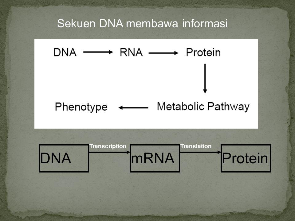 Sekuen DNA membawa informasi DNAmRNAProtein TranscriptionTranslation