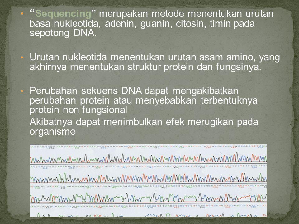 """"""" Sequencing"""" merupakan metode menentukan urutan basa nukleotida, adenin, guanin, citosin, timin pada sepotong DNA. Urutan nukleotida menentukan uruta"""