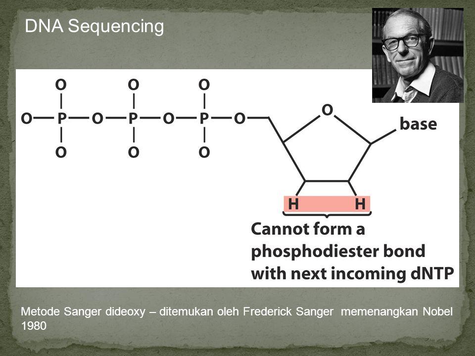 Metode Sanger dideoxy – ditemukan oleh Frederick Sanger memenangkan Nobel 1980 A lot of modern DNA sequencing is based upon the following modified nuc