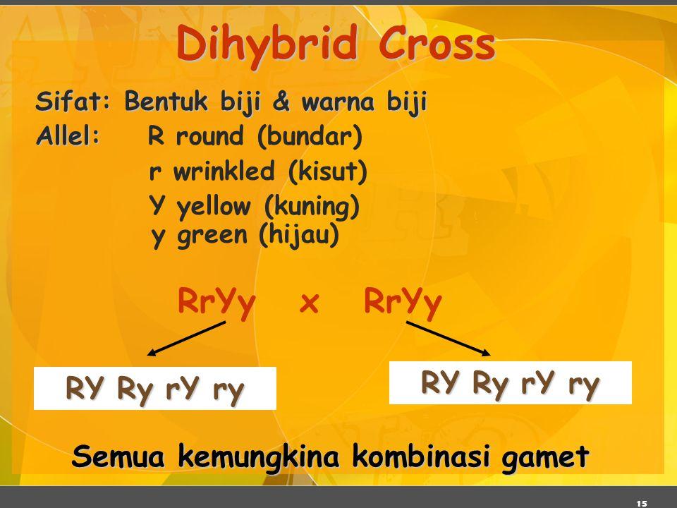 15 Dihybrid Cross Sifat: Bentuk biji & warna biji Allel: Allel: R round (bundar) r wrinkled (kisut) Y yellow (kuning) y green (hijau) RrYy x RrYy RY R