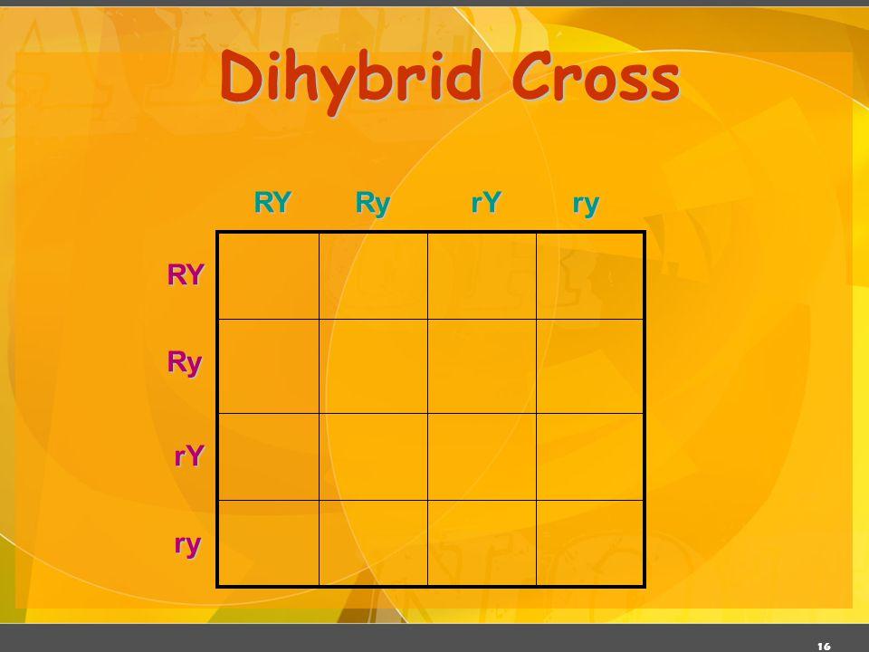 16 Dihybrid Cross RYRyrYry RYRy rY ry