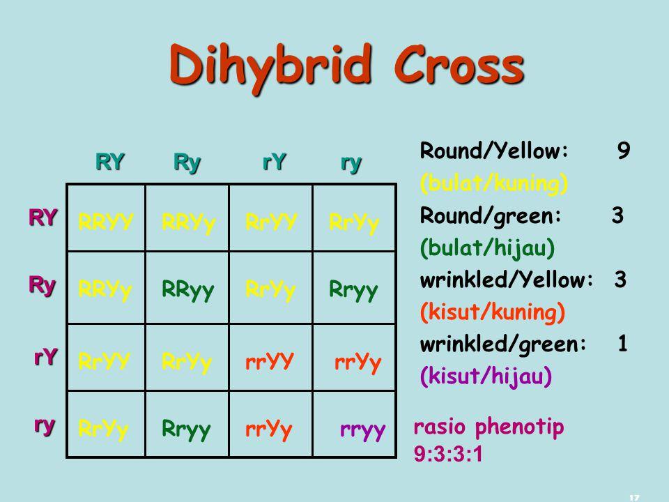 17 Dihybrid Cross RRYY RRYy RrYY RrYy RRYy RRyy RrYy Rryy RrYY RrYy rrYY rrYy RrYy Rryy rrYy rryy Round/Yellow: 9 (bulat/kuning) Round/green: 3 (bulat