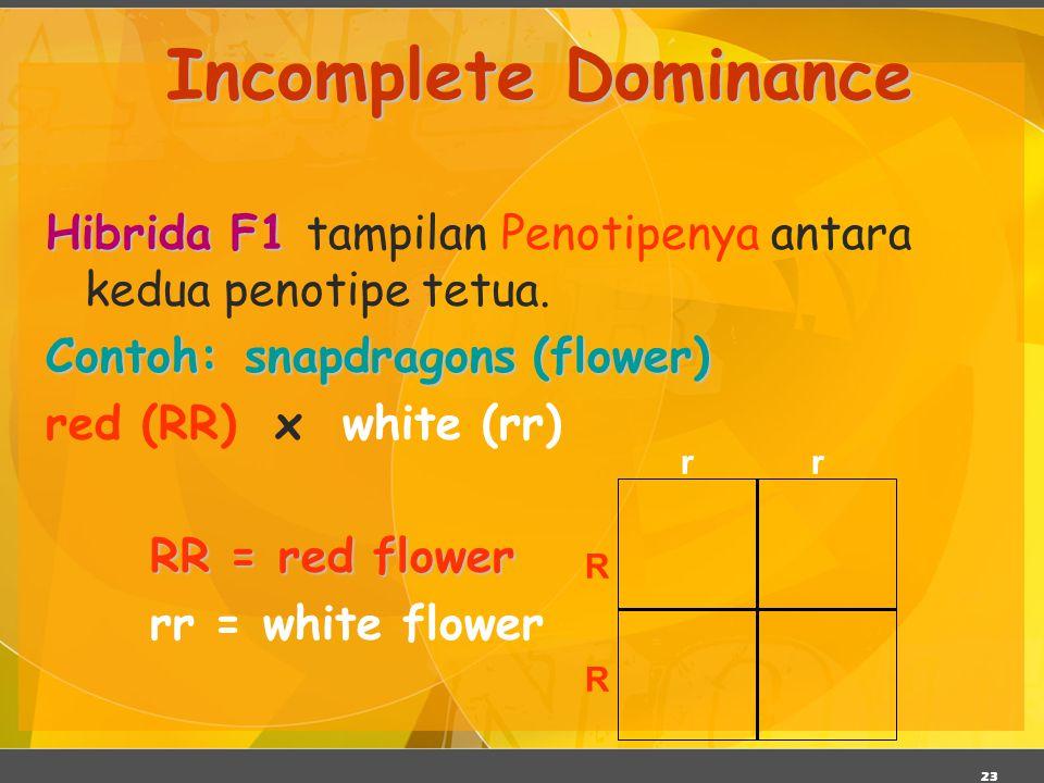 23 Incomplete Dominance Hibrida F1 Hibrida F1 tampilan Penotipenya antara kedua penotipe tetua. Contoh:snapdragons (flower) Contoh: snapdragons (flowe