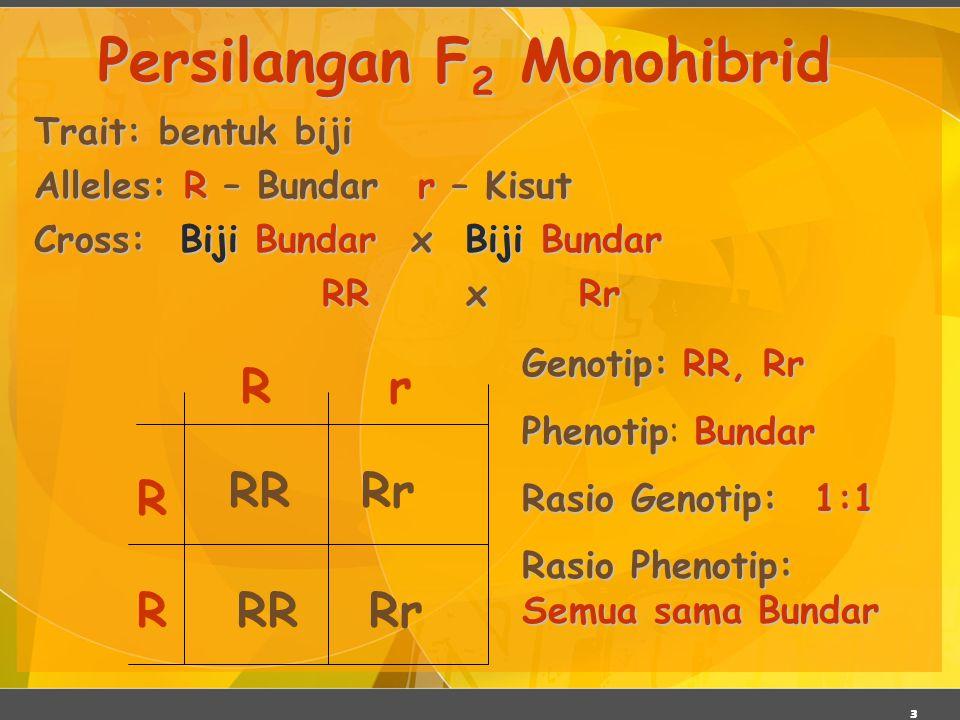 3 Trait: bentuk biji Alleles: R – Bundarr – Kisut Cross: Biji Bundar x Biji Bundar RR x Rr Persilangan F 2 Monohibrid R R rR RR RrRR Rr Genotip:RR, Rr