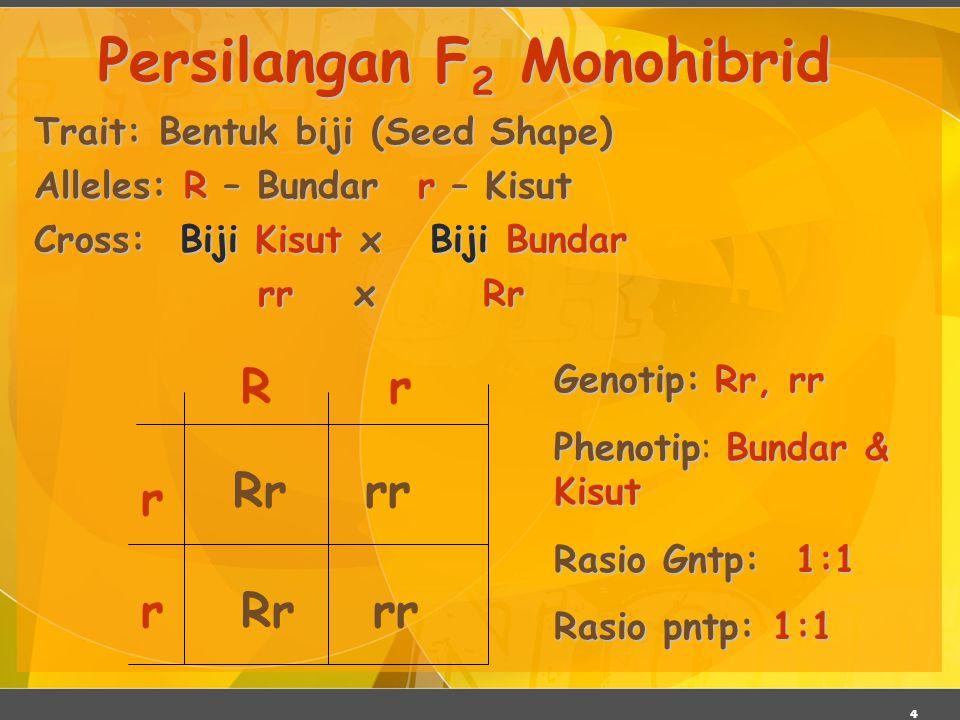 4 Trait: Bentuk biji (Seed Shape) Alleles: R – Bundarr – Kisut Cross: Biji Kisut x Biji Bundar rr x Rr rr x Rr Persilangan F 2 Monohibrid r r rR Rr rr