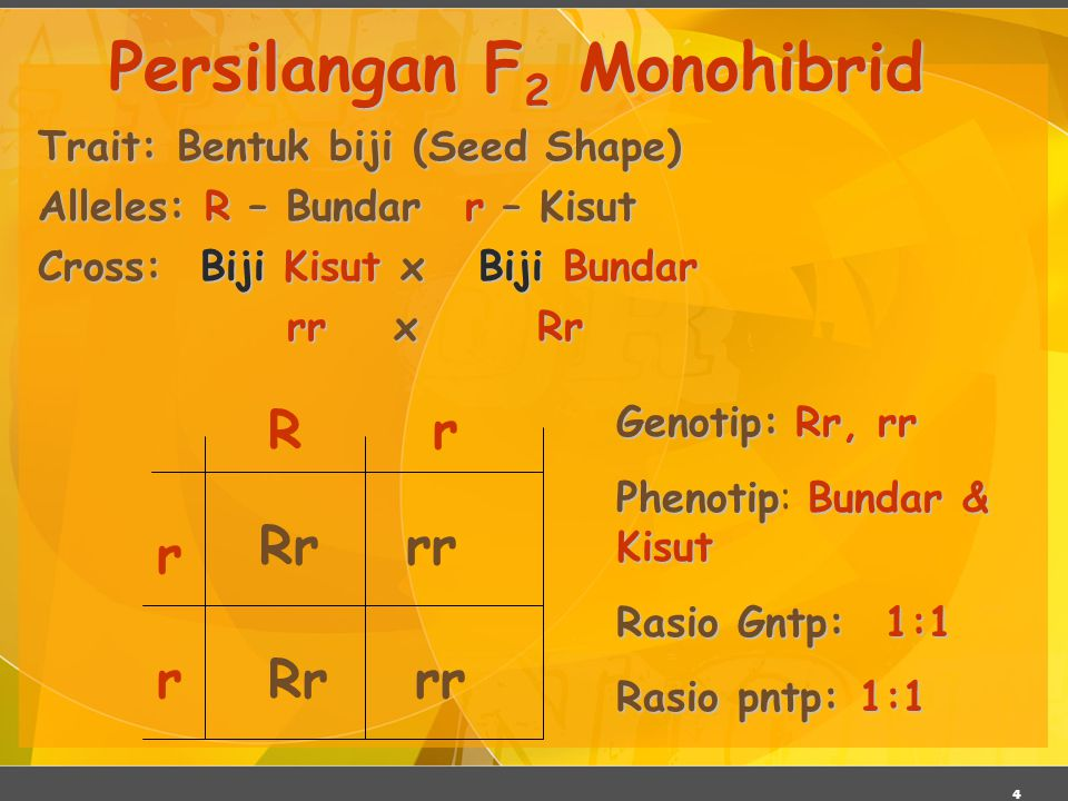 15 Dihybrid Cross Sifat: Bentuk biji & warna biji Allel: Allel: R round (bundar) r wrinkled (kisut) Y yellow (kuning) y green (hijau) RrYy x RrYy RY Ry rY ry Semua kemungkina kombinasi gamet
