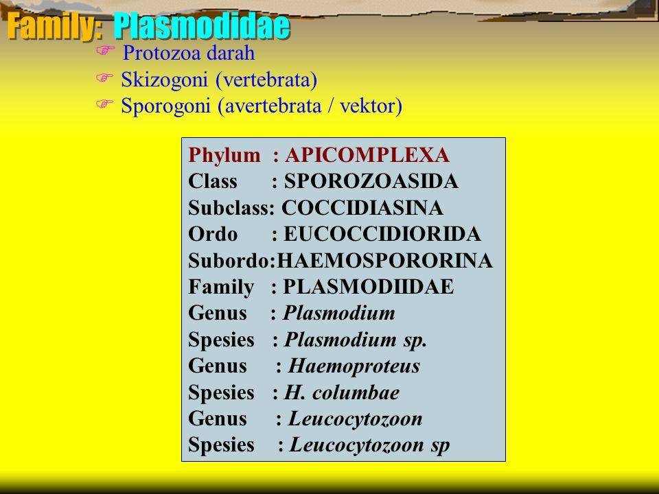 Family: Plasmodidae Phylum : APICOMPLEXA Class : SPOROZOASIDA Subclass: COCCIDIASINA Ordo : EUCOCCIDIORIDA Subordo:HAEMOSPORORINA Family : PLASMODIIDAE Genus : Plasmodium Spesies : Plasmodium sp.