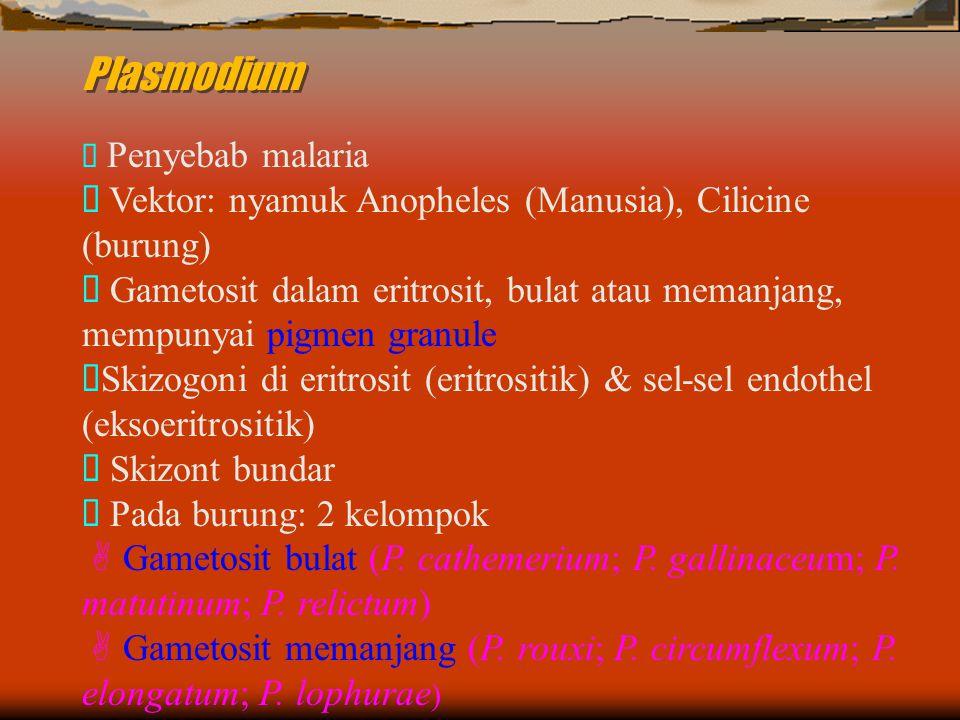 Plasmodium  Penyebab malaria  Vektor: nyamuk Anopheles (Manusia), Cilicine (burung)  Gametosit dalam eritrosit, bulat atau memanjang, mempunyai pigmen granule  Skizogoni di eritrosit (eritrositik) & sel-sel endothel (eksoeritrositik)  Skizont bundar  Pada burung: 2 kelompok  Gametosit bulat (P.