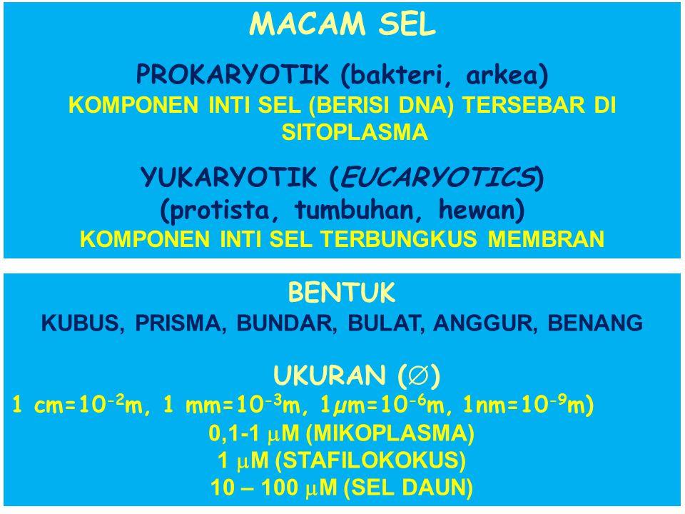 SEL: (cellula: ruang kecil, tempat berongga) PENYUSUN TUBUH ORGANISME SEBAGAI: Satuan struktur terkecil: penentu seluruh aktifitas organisme Satuan fu