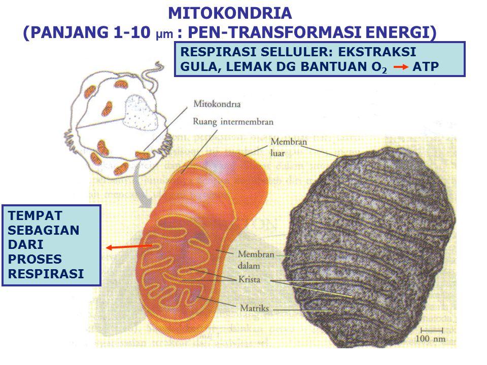 TELAAH HUBUNGAN DIANTARA ENDOMEMBRAN-ENDOMEMBRAN: JALUR MIGRASI MEMBRAN MELALUI BERBAGAI ORGANEL SISTEM ENDOMEMBRAN