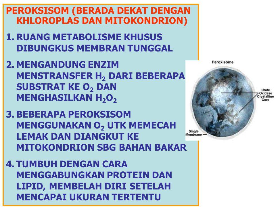 Stroma Membran dalam Membran luar Tilakoid Grana PLASTIDA BERWARNA: KHROMATOPORA (KHLOROPLAS:KHLOROPIL/HIJAU DAN KHROMOPLAS: XANTOFIL/KUNING, ANTHOSIA