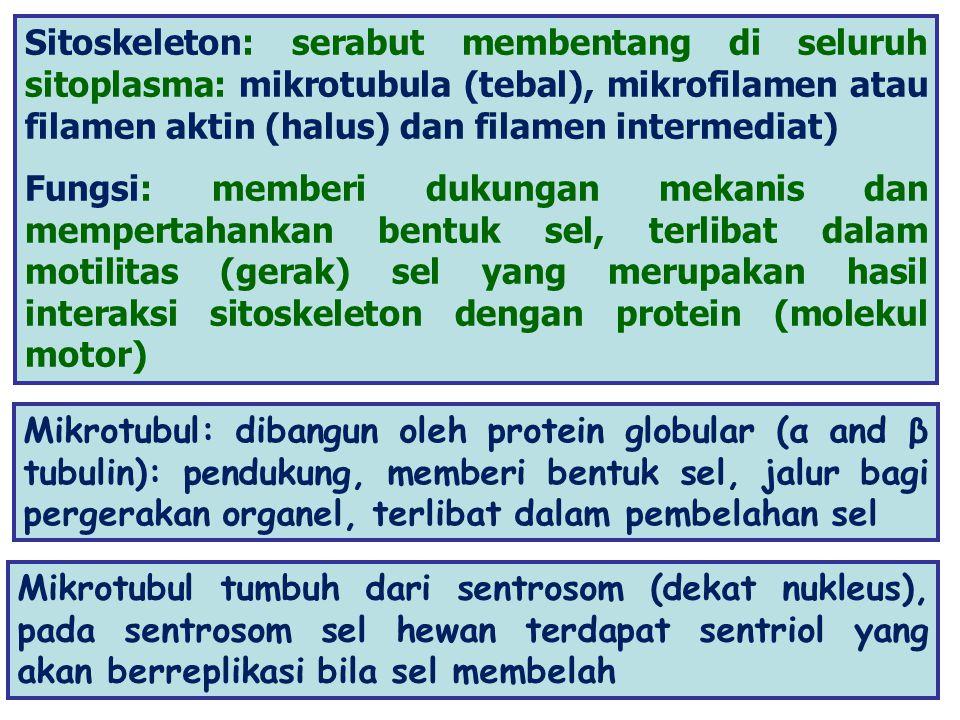 PEROKSISOM (BERADA DEKAT DENGAN KHLOROPLAS DAN MITOKONDRION) 1.RUANG METABOLISME KHUSUS DIBUNGKUS MEMBRAN TUNGGAL 2.MENGANDUNG ENZIM MENSTRANSFER H 2