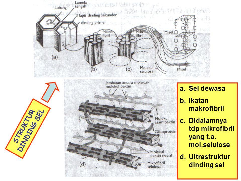 SKEMA DINDING SEL DAN PLASMODESMATA Skema menunjukkan stratifikasi ddg. sel. Terdiri atas 4 lapis (ddg. primer dan 3 lapis ddg. sekunder) Dinding sel