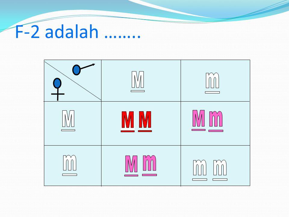 Parental (P) Merah (MM)x putih (mm) Gamet Mx m Keturunan 1 (F1) Mm ( Merah muda / Ros ) P2 Mmx gamet M M m m F2 = ……...