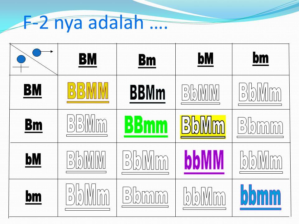 P-2BbMmx BbMm besar, manis besar, manis Gamet : BM Bm bM bm Bagaimana F2-nya ….?